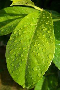 wet_leaves